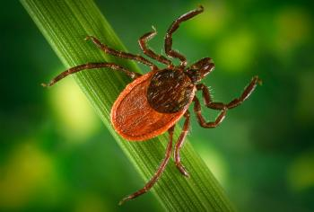 Ticks!  The Season is upon us again!